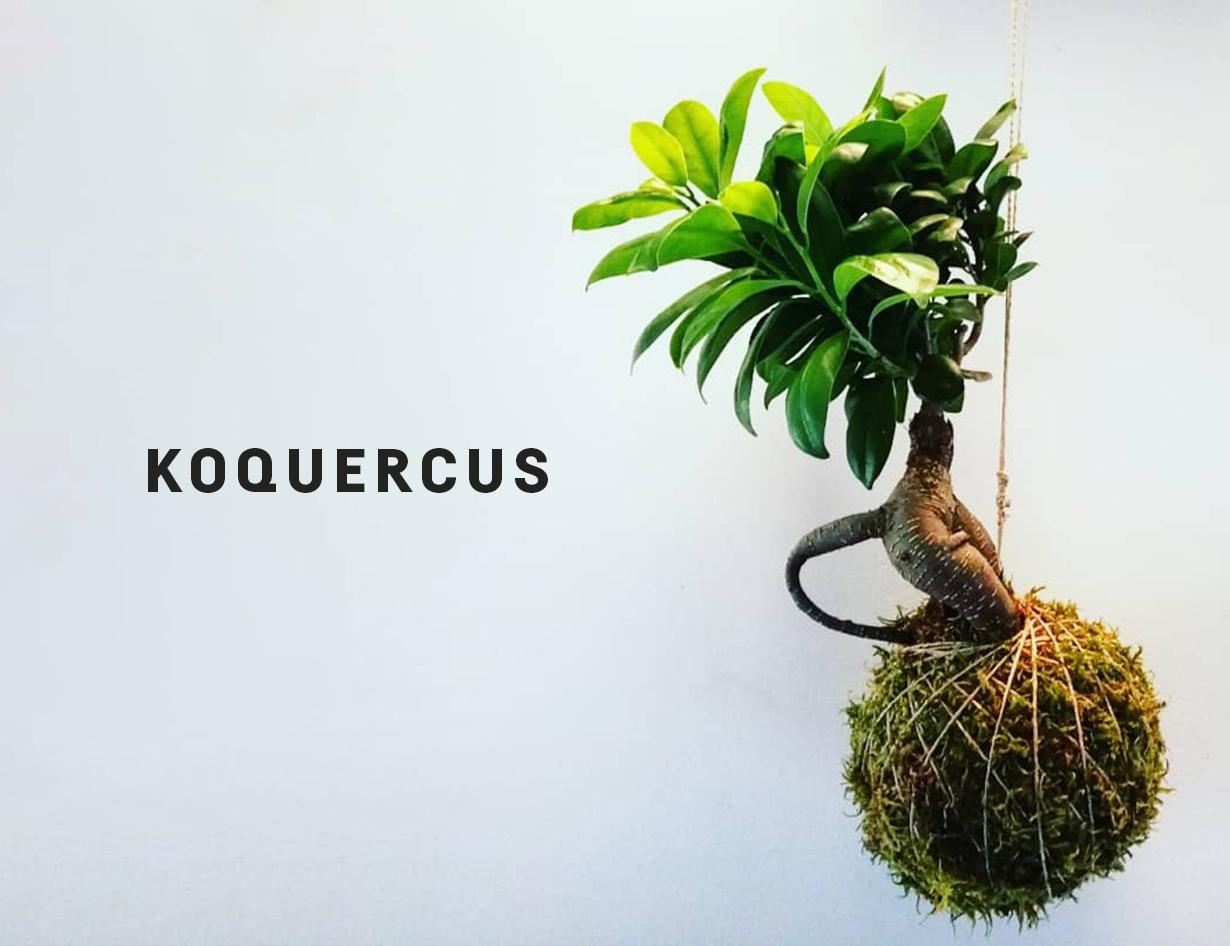 Koquercus